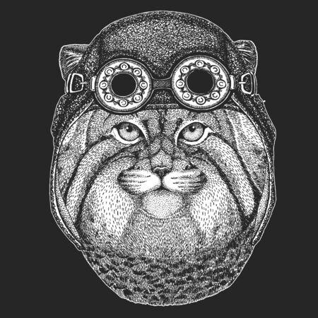 Pallas cat head. Manul head. Aviator leather helmet. Wild cat portrait. Ilustración de vector