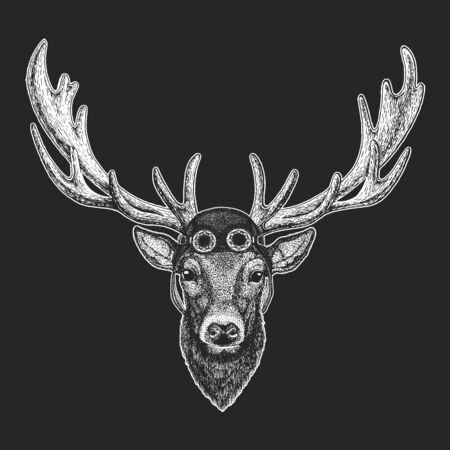 Deer portrait. Aviator leather helmet. Head of wild animal.