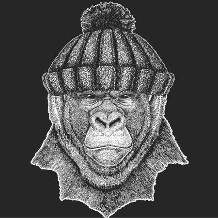 Baboon, monkey, ape. Winter knitted hat. Head, portrait of animal.