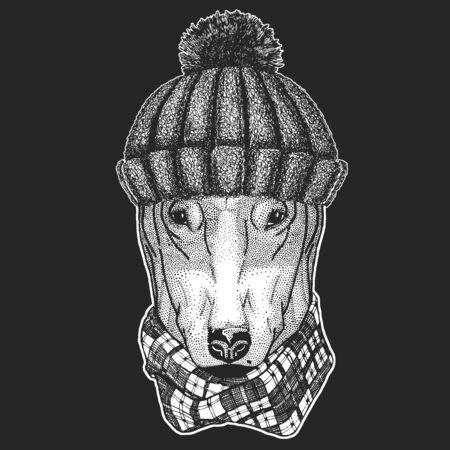 Bullterrier, dog. Winter knitted hat. Animal portrait.