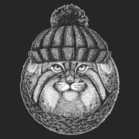Pallas cat head. Winter knitted hat. Manul head. Wild cat portrait.