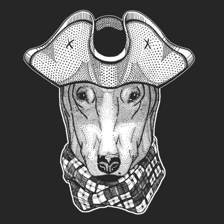 Bullterrier, dog. Pirate cocked hat. Sailor.