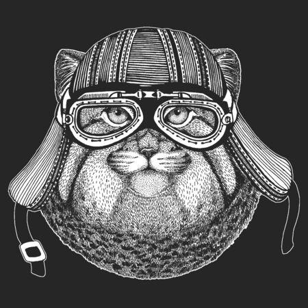 Pallas cat head. Manul head. Wild cat portrait. Ilustración de vector