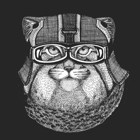 Pallas cat head. Manul head. Vintage motorcycle leather helmet. Wild cat portrait.