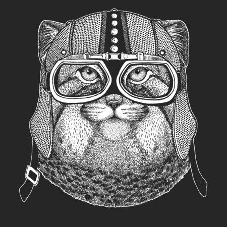 Pallas cat head. Manul head. Vintage motorcycle leather helmet. Wild cat portrait. Ilustración de vector