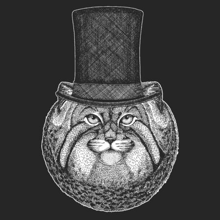 Pallas cat head. Top hat, cylinder. Manul head. Wild cat portrait.