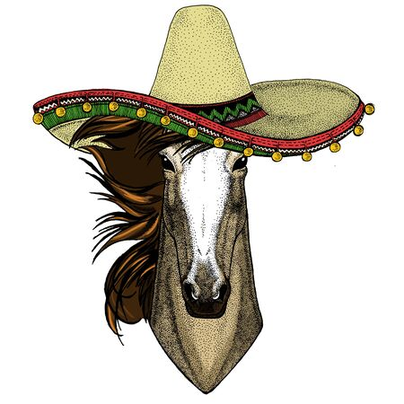 Horse, steed, courser. Sombrero mexican hat. Portrait of wild animal. Stock Photo