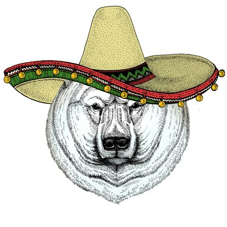 Polar bear portrait. Sombrero mexican hat. Head of wild animal