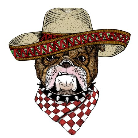 Bulldog, dog. Sombrero mexican hat. Portrait of cute animal. Stock Photo