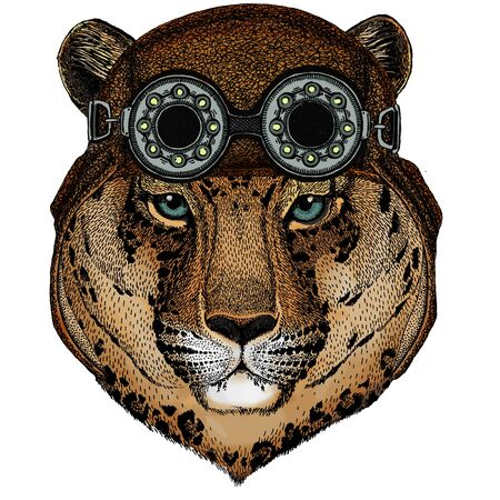 Animal wearing aviator flying leather helmet with goggles.