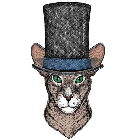 Wild animal Mascot character. Cylinder hat Illustration