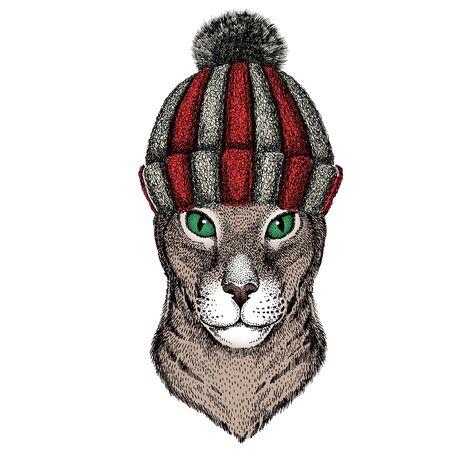 Knitted wool winter hat. Wild animal.