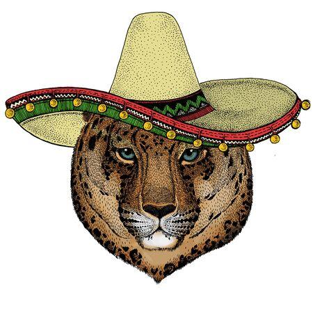 Leopard, jaguar face. Sombrero mexican hat. Portrait of wild animal.