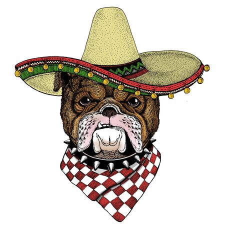 Bulldog, dog. Sombrero mexican hat. Portrait of cute animal.