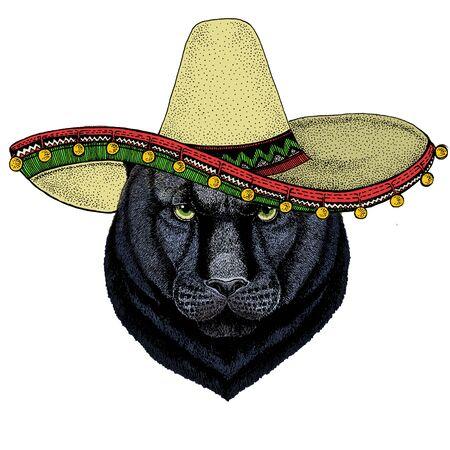 Black panther, puma. Sombrero mexican hat. Head of animal. Wild cat portrait.