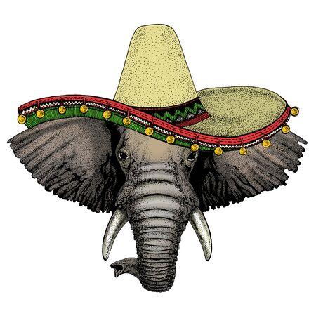 Elephant head. Sombrero mexican hat. Portrait of wild animal.
