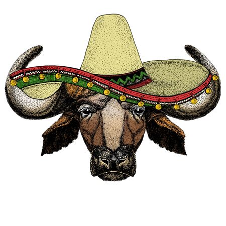 Portrait of buffalo, bison, bull, cow. Sombrero mexican hat. Face of animal. Illustration