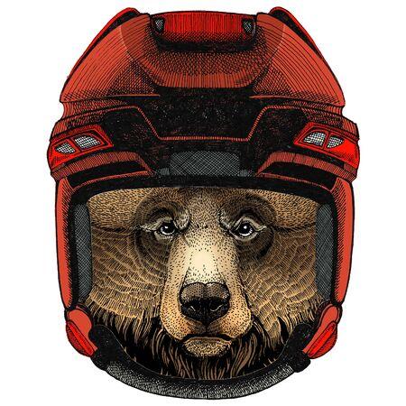 Grizzly bear. Portrait of wild animal. Illustration