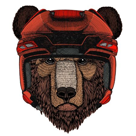 Wild bear. Portrait of animal for emblem,  tee shirt.