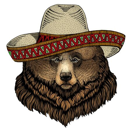 Grizzly bear. Sombrero mexican hat. Portrait of wild animal.
