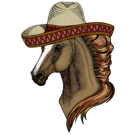 Horse, steed, courser. Sombrero mexican hat. Portrait of wild animal. Illustration