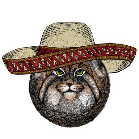 Pallas cat head. Sombrero mexican hat. Manul head. Wild cat portrait.