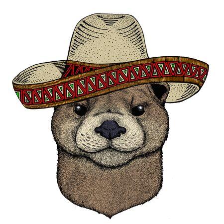 Portrait of otter. Sombrero mexican hat. Cute animal head. Vettoriali