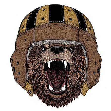 Wild bear. Portrait of animal. Rugby leather helmet.