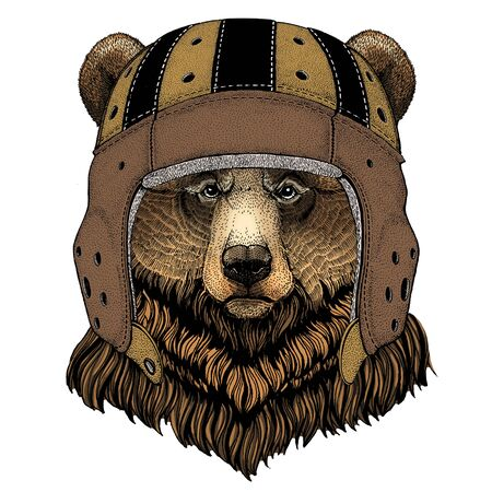 Grizzly bear. Rugby leather helmet. Portrait of wild animal. Illustration