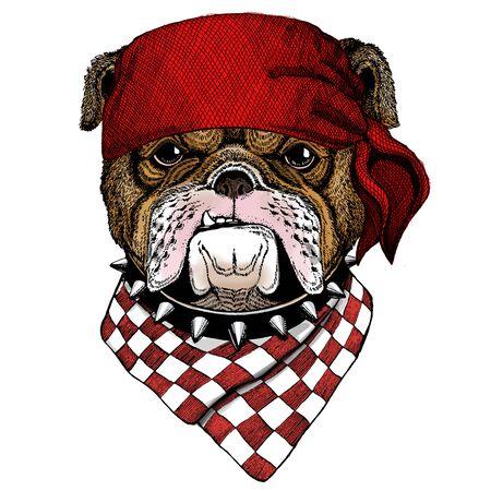 Bulldog, dog. Portrait of cute animal. Bandana. Pirate. Motorcycle.