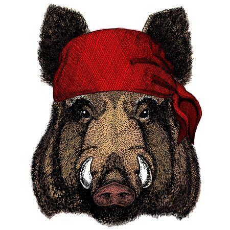 Portrait of wild hog, boar, pig. Face of brave animal. Bandana. Pirate. Motorcycle. Illustration