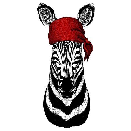 Zebra portrait. Head of wild animal. Bandana. Pirate. Motorcycle. Illustration