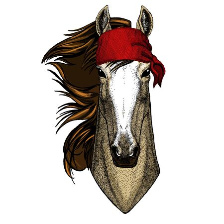 Horse, steed, courser. Portrait of wild animal. Bandana. Pirate. Motorcycle.