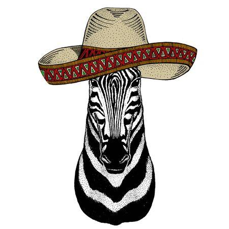 Zebra portrait. Sombrero mexican hat. Head of wild animal.