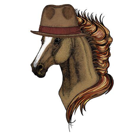 Horse, steed, courser. Portrait of wild animal. Fedora classic hat. Illustration