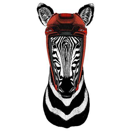 Zebra portrait. Head of wild animal.