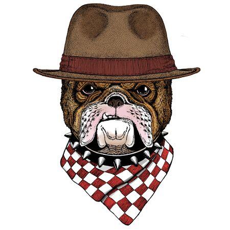 Bulldog, dog. Portrait of cute animal. Fedora classic hat.
