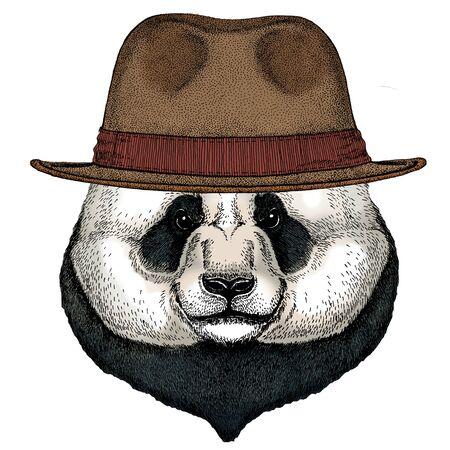 Big panda, bamboo bear portrait. Face of cute animal. Bear head. Fedora classic hat. Illustration