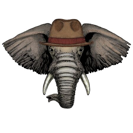 Fedora classic hat. Mascot, character Face of animal