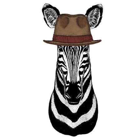 Zebra portrait. Head of wild animal. Fedora classic hat.