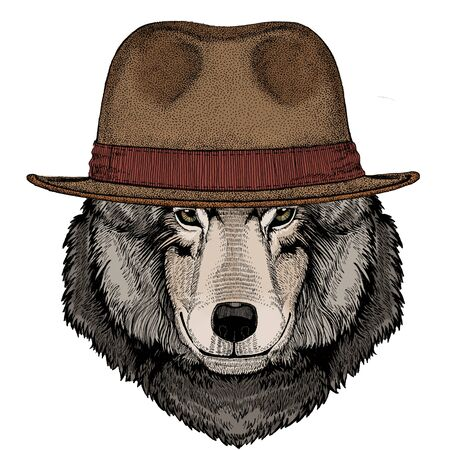 Wolf portrait. Head of wild animal. Fedora classic hat.