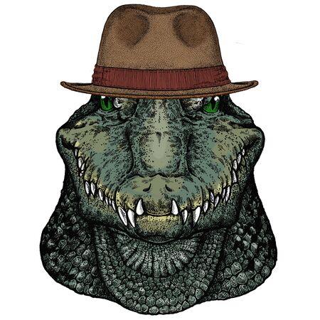 Alligator. Crocodilia. Portrait of african agressive animal. Fedora classic hat.