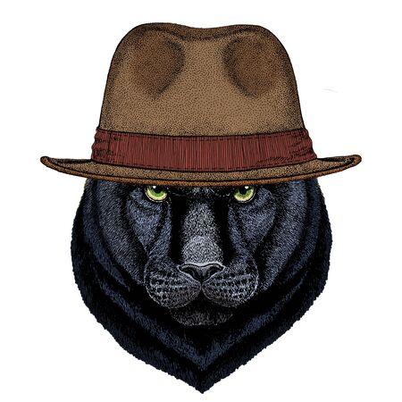 Black panther, puma. Head of animal. Wild cat portrait. Fedora classic hat.