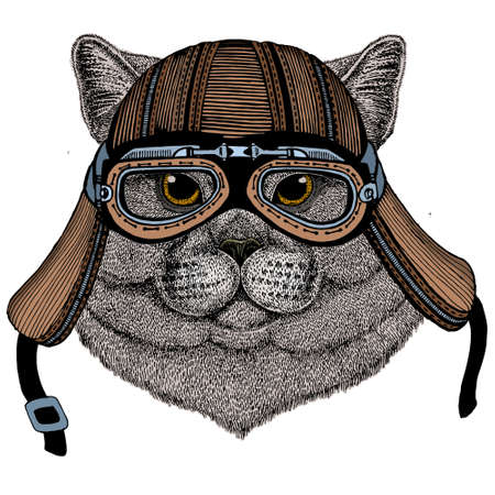 British shorthair cat. Scottish fold. Cute kitten. Motorcycle helmet. 矢量图像