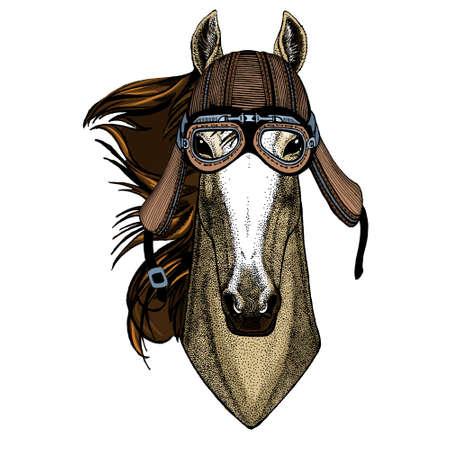 Horse, steed, courser. Portrait of wild animal. Motorcycle helmet.