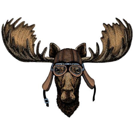 Moose head. Portrait of funny animal. Motorcycle helmet.