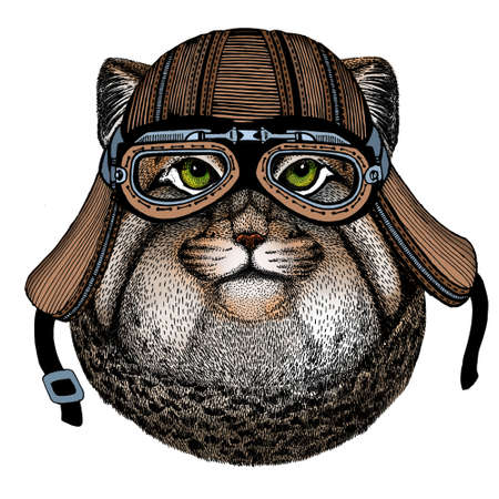 Pallas cat head. Manul head. Wild cat portrait. Motorcycle helmet.