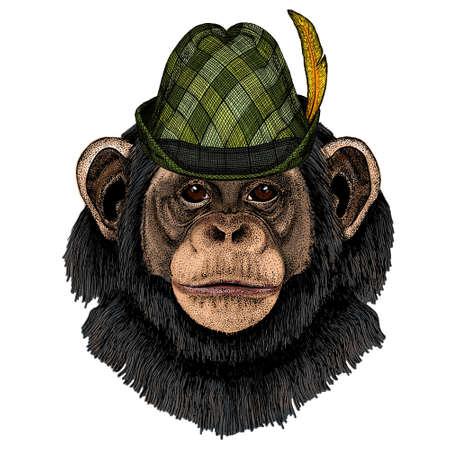 Chimpanzee, chimp portrait. Austrian bavarian tirol hat. Beer festival. Oktoberfest. Monkey face. Ape head. Illusztráció