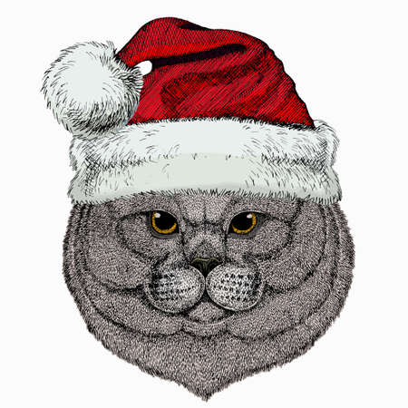 British shorthair cat animal cute face. Christmas winter animal. Red Santa Claus hat. Vector happy silver British kitten head portrait.