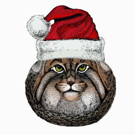 Pallass cat. Christmas red Santa Claus hat. Christmas winter animal vector portrait.